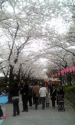 春爛漫隅田川Ⅴ